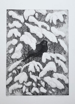 The Blackbird - Etching by Eva Holmér Edling.