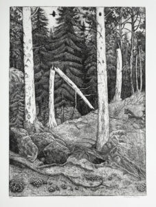 The Aspen Trees - Etching by Eva Holmér Edling.