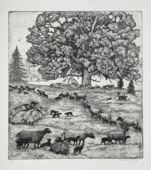 Herd of Sheep - Etching by Eva Holmér Edling.