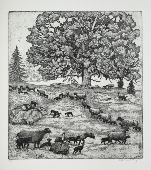 Herd of Sheep - Etching by Eva Holmér Edling.