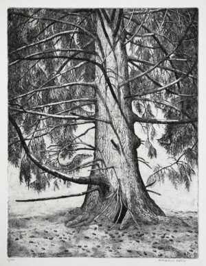 Fir - Etching by Eva Holmér Edling.