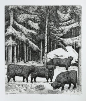Etsning Highland cattle, winter av Eva Holmér Edling