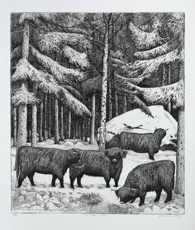Highland cattle, winter - Etching by Eva Holmér Edling.