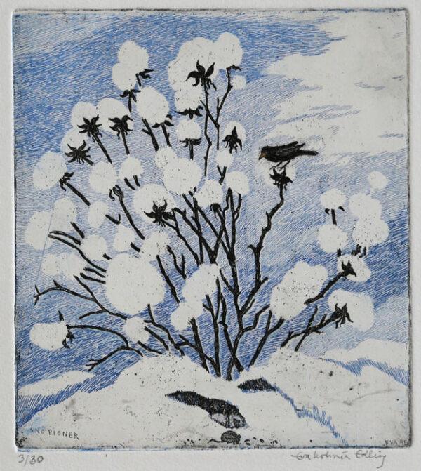 Peony of Snow - Etching by Eva Holmér Edling.