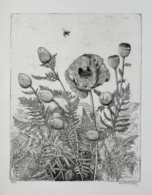 Poppies - Etching by Eva Holmér Edling.