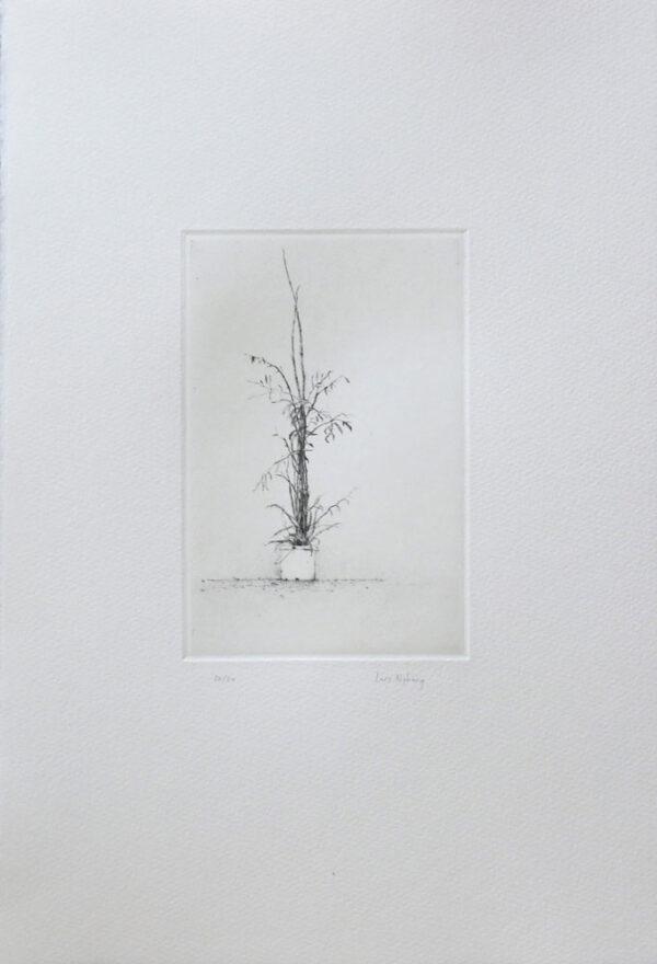 Torrnål Bambu av Lars Nyberg.