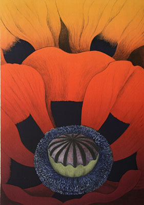 Papaver - Lithograph by Maria Hillfon.