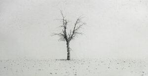 Torrnål Olivträd av Lars Nyberg.