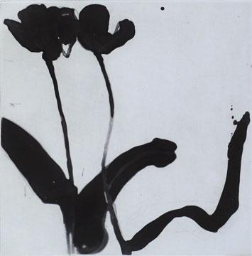 Tulip XII - Etching by Pontus Raud.