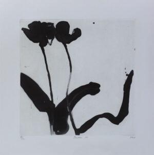 Tulip VII - Etching by Pontus Raud.