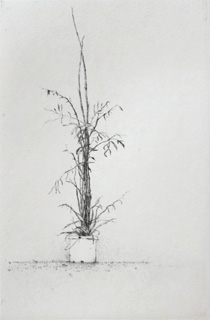 Bamboo - Drypoint by Lars Nyberg.