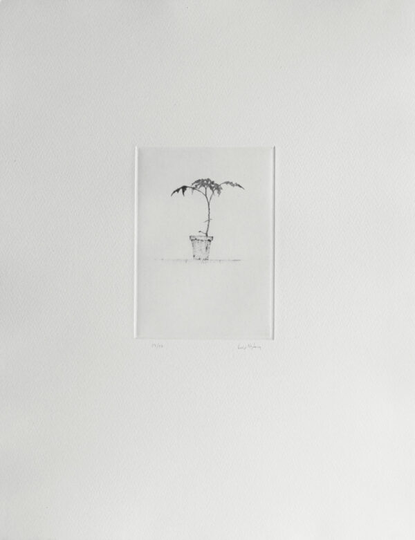Small Plant - Drypoint by Lars Nyberg.