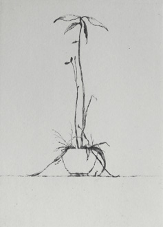 Small and Large Avocado - Drypoint by av Lars Nyberg.