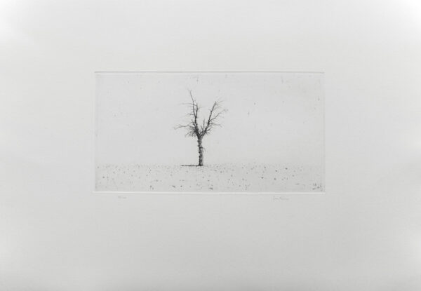 Olive Tree - Drypoint by Lars Nyberg.