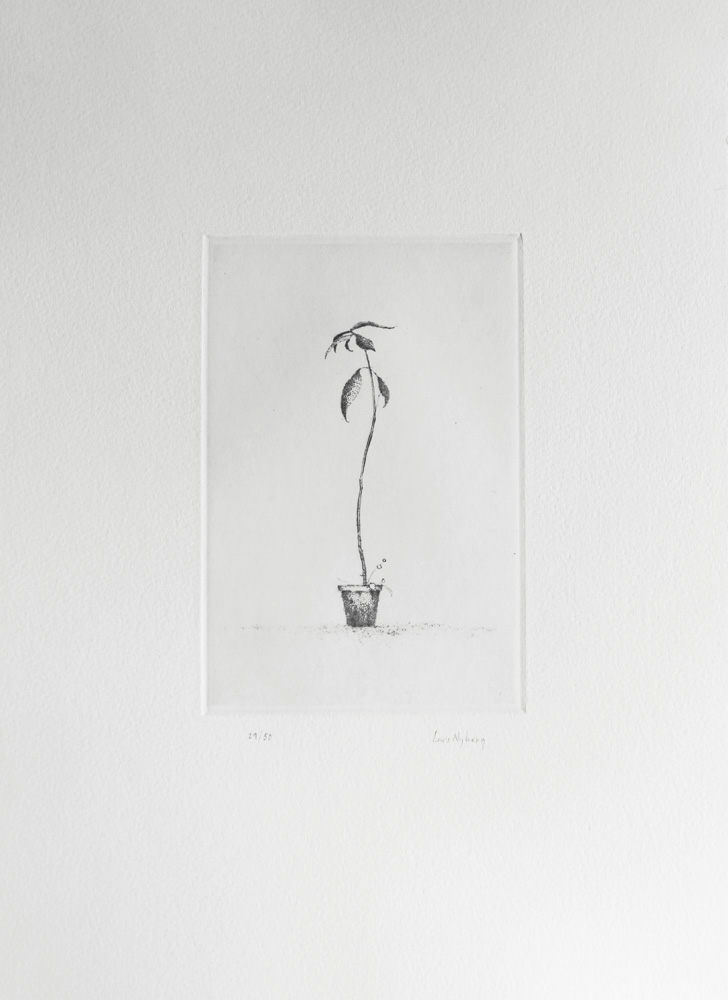 Young Avocado - Drypoint by Lars Nyberg.