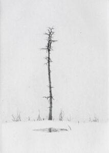Torrnål Vintertjärn av Lars Nyberg.