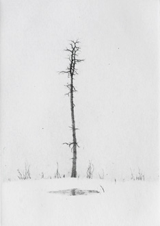 Winter Tarn - Drypoint by Lars Nyberg.
