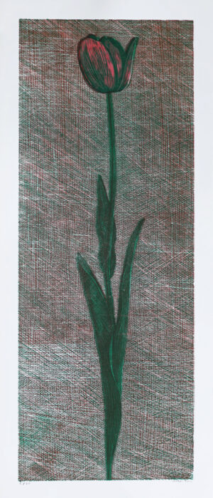 Tulip - Woodcut by Peter Ern.