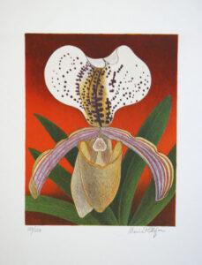 Litografi Orkidé av Maria Hillfon.